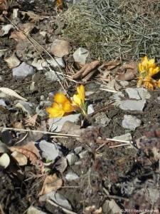 20110306-01 - Britzer Garten