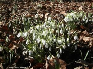 20110306-03 - Britzer Garten