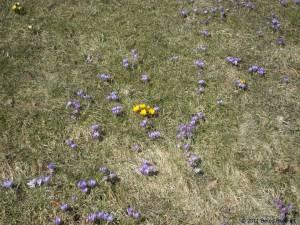 20110306-05 - Britzer Garten