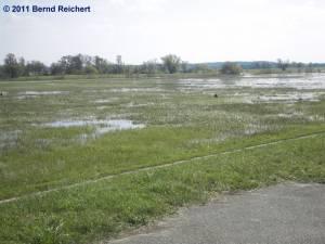 Natürliche Überflutungsfläche im unteren Odertal südlich von Gartz, aufgenommen am 18.04.2011