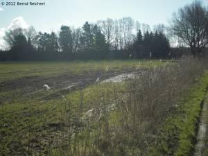 20120408-02 - Lübeck, Wakenitztal – Landwirtschaft mit Naturstreifen