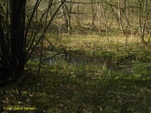 20120408-03 - Lübeck, NSG Wakenitz, kleiner Tümpel im Wald
