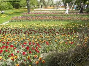 20120430-09 - Britzer Garten - Tulipan-Ausstellungsfläche