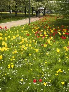 20120430-10 - Britzer Garten - Tulipan
