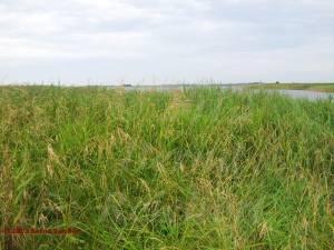 20120805-03 - Blick über den Kapeller See