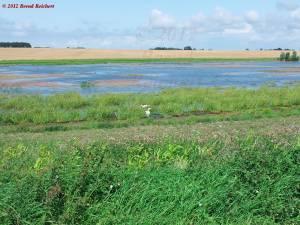 20120809-131336 - Kleiner Teich bei Putgarten