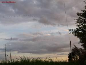 20120809-202210 - Wildgänse im Formationsflug