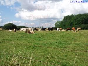 20120812-08 - Landwirtschaft kann tatsächlich idyllisch sein ...