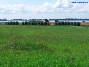 20120812-10 - Blick von Silmenitz auf die Schoritzer Wiek