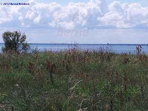 20120812-12 - Grabow (Halbinsel Zudar). Blick am Südostufer über den Greifswalder Bodden