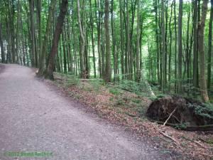 20120814-06 - Herrlicher Buchenwald in der Stubnitz