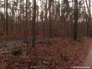 20121201-12 - Im Wald zwischen Hessenwinkel und Schönhorst
