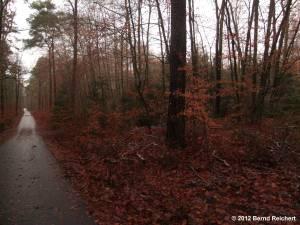 20121201-13 - Im Wald zwischen Hessenwinkel und Schönhorst