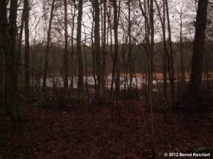 20121201-14 - Im Wald zwischen Hessenwinkel und Schönhorst