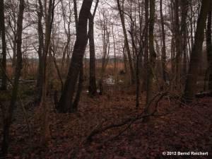 20121201-28 - Lagune am Südostufer des Großer Müggelsees