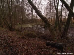 20121201-31 - Lagune am Südostufer des Großer Müggelsees