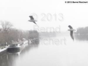 20130209-04 - Lachmöwenpäärchen über der Spree, direkt an der Parkwegbrücke