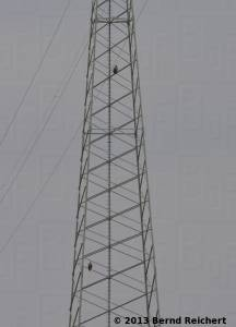 20130804-20 - Seeadler