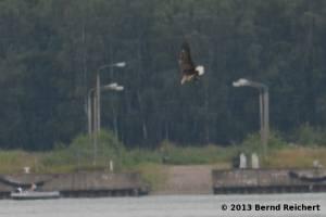 20130804-31 - Seeadler