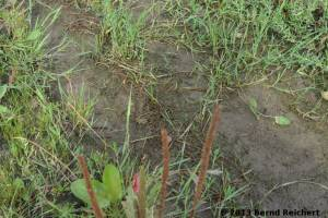 20130809-36 - Kleiner Wasserfrosch