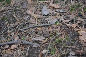 20130922-55 - Springfrosch