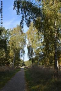 20131014-0105 - Hängebirke