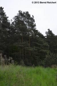 20130520-002 - Wald-Kiefer